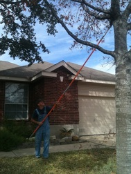 Tree Trimming in San Antonio Texas United States of America